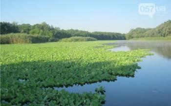 Украинскую реку оккупировал тропический сорняк