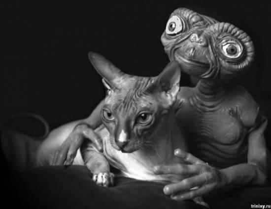 Инопланетяне в шкуре кошек?