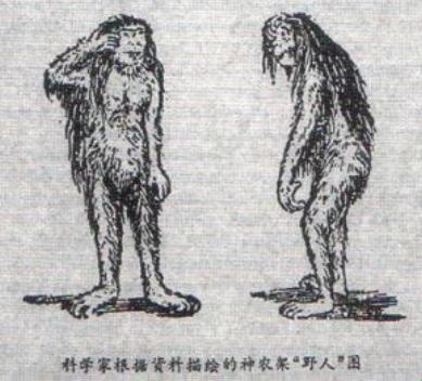 Китайский дикарь йети - либо существо, либо гигантопитек
