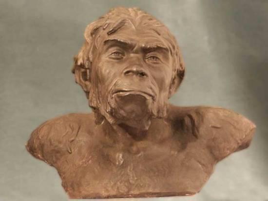 Реконструкция Синантропа (пекинского человека) лат. Sinanthropus pekinensis