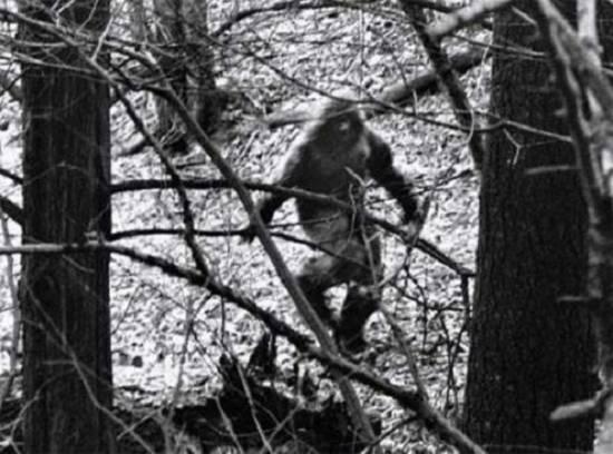 В ульяновских лесах видели Снежного Человека