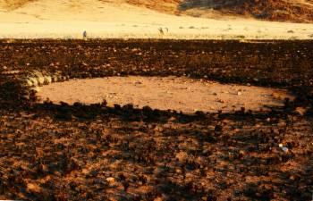 «Ведьмин круг» в Намибии.