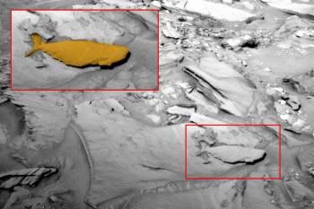 Уфолог обнаружил на Марсе окаменевшую рыбу