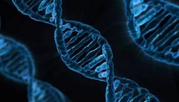 Человеческая ДНК.
