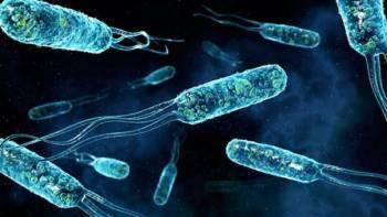 вирус Эбола, Вирус Зика