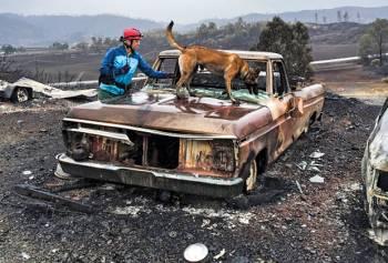 Кэблк и ее собака ищут останки после лесного пожара в Калифорнии
