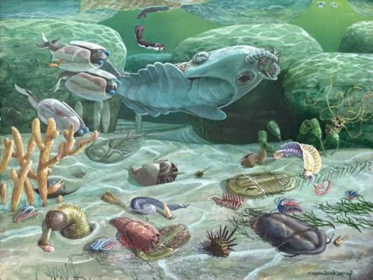 Нестыковки в эволюции