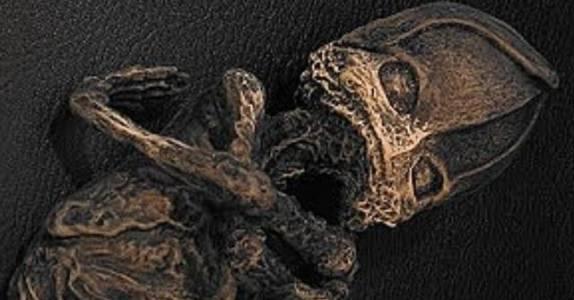 Мумия пришельца Алёшеньки