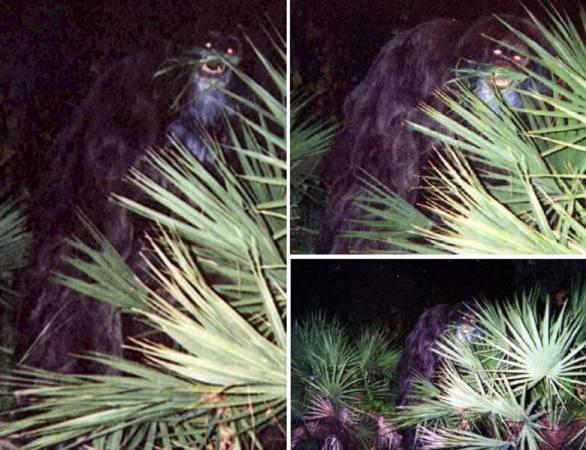 """Единственные четкие фото """"скунсовой обезьяны"""" были сделаны в 2000 год"""