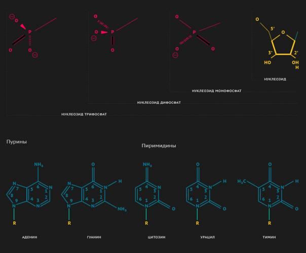 Инопланетное происхождение жизни на Земле доказали химичес